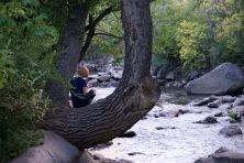 03-kate_in_tree