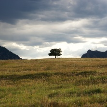 06-lone_tree-light