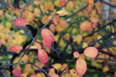 06-orange_leaves