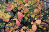 06-orange_leaves